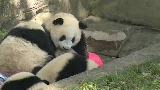 Daily showers, cold treats help animals stay cool at Chongqing Zoo